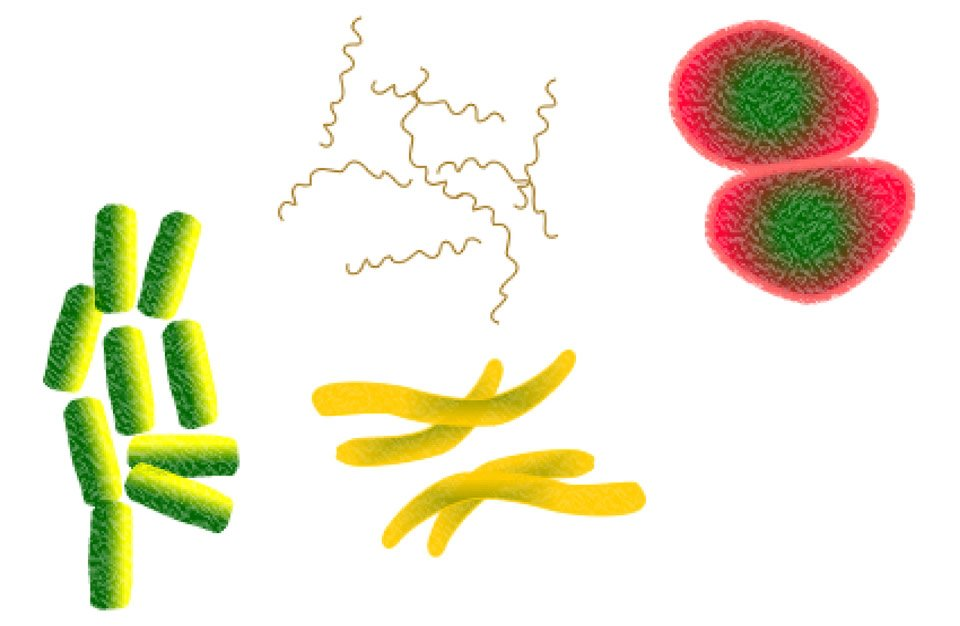 Bacteria, Microbes, Infection, Health