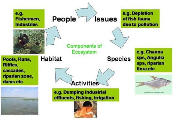 Ecosystem Components