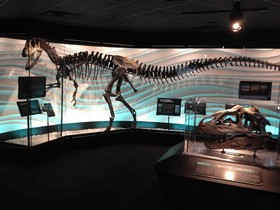 Allosaur Exhibit