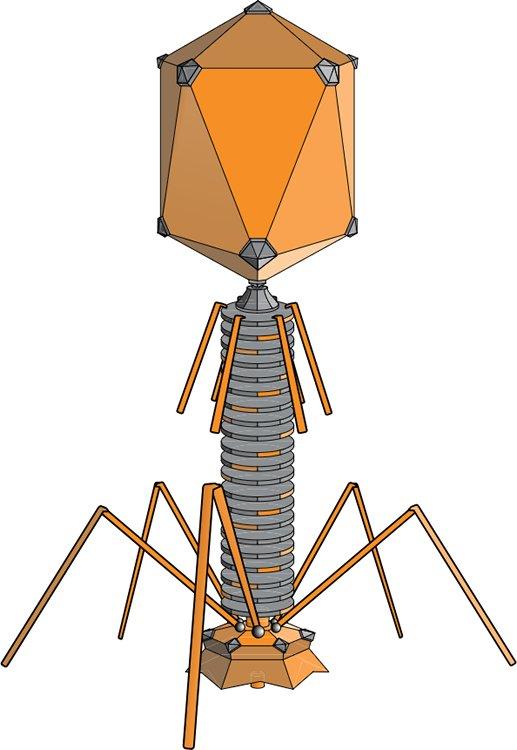 Artistic rendering of T4 bacteriophage