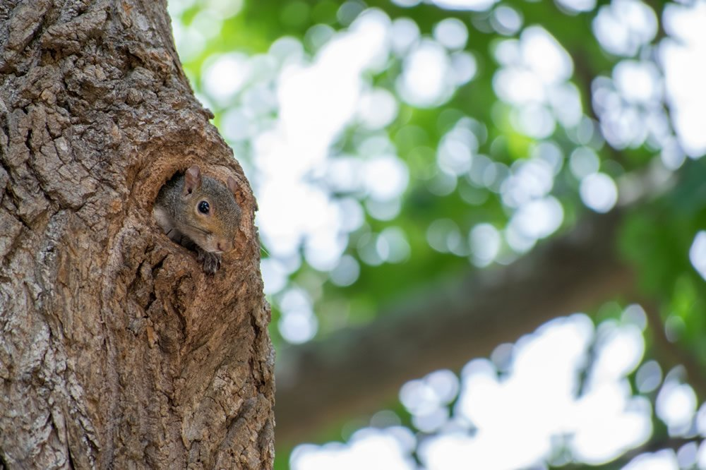 The Not-So-Nutty Habits of Squirrels | Answers in Genesis