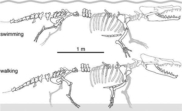 Walking Whale Skeleton Rendering