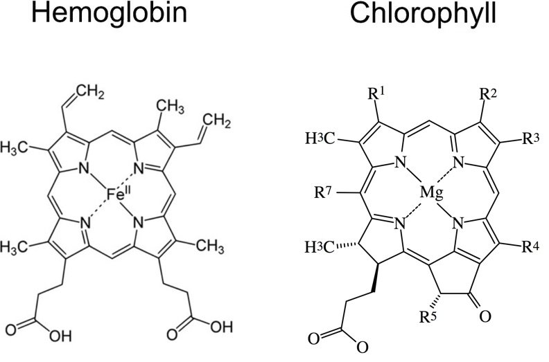 Comparison Between the Heme Groups of Chlorophyll and Hemoglobin