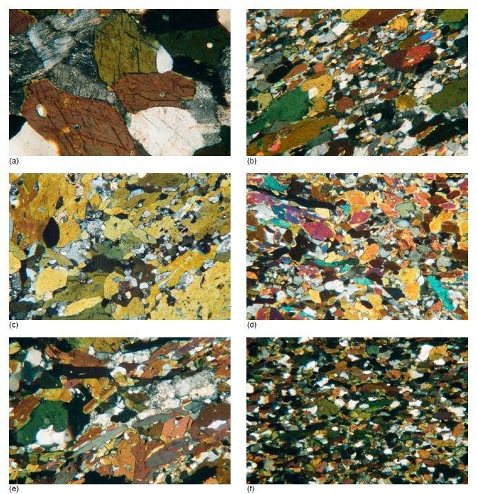 Photo-micrographs