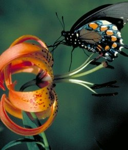 God Created Plant Pollinator Partners | Answers in Genesis