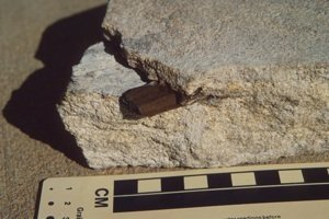 Triassic fossil wood