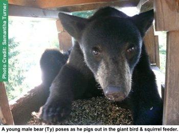 bear in feeder
