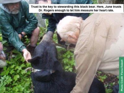 Bear habituation