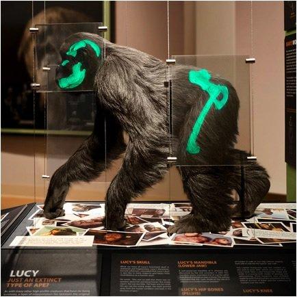 CM Lucy exhibit