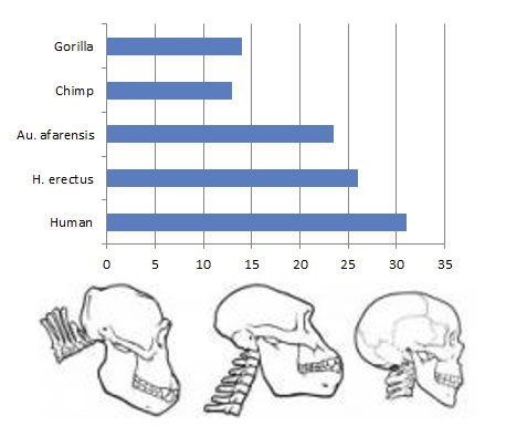 Comparison of Skull and Vertebrae