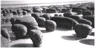 Hamelin Pool Stromatolites