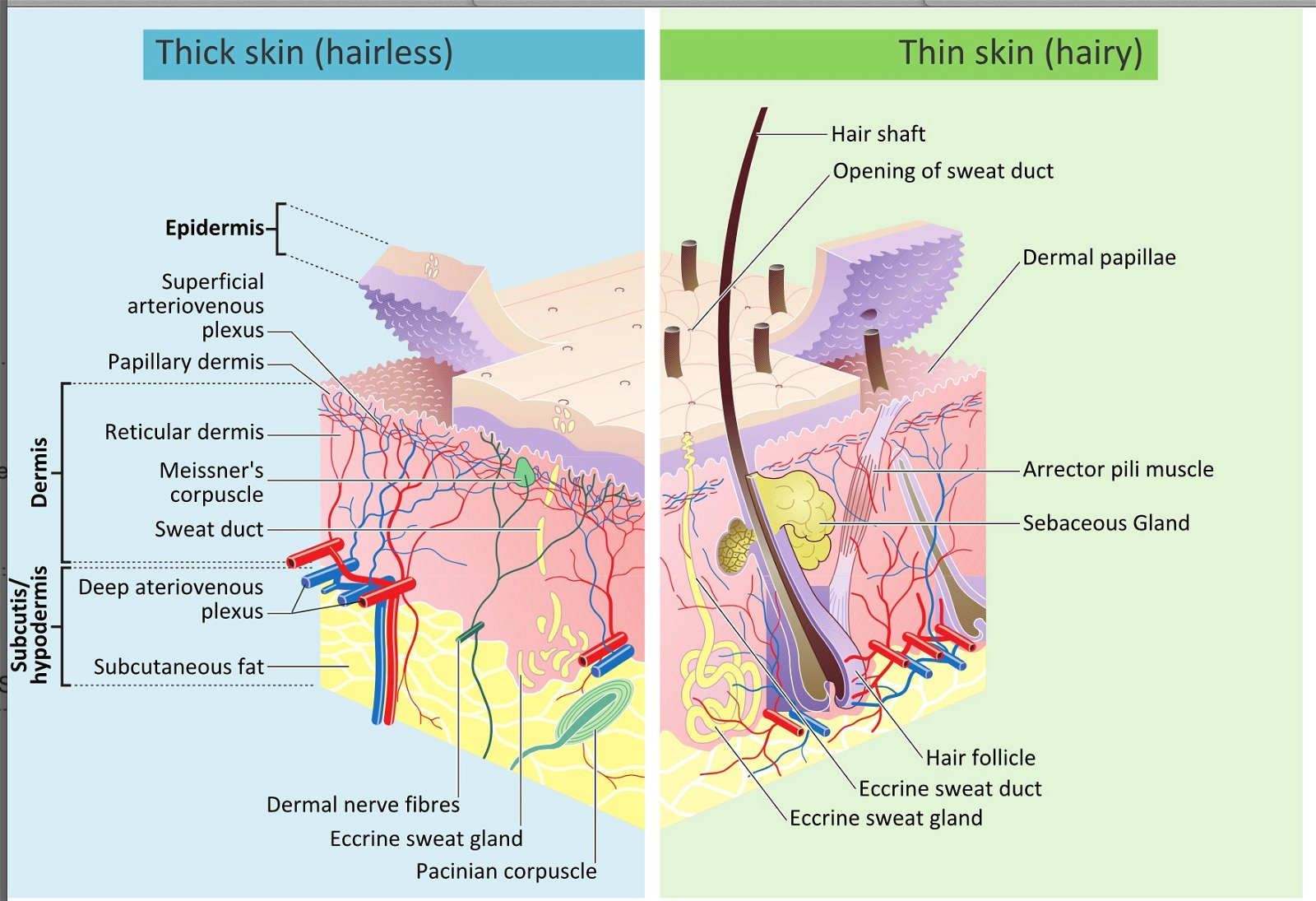 The Wonderfully Made Design of the Skin and Its Microbiome ...