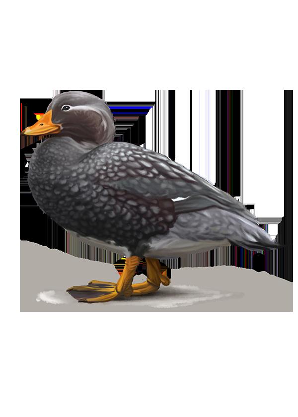 Steamer Duck Wing Diagram - DIY Enthusiasts Wiring Diagrams •