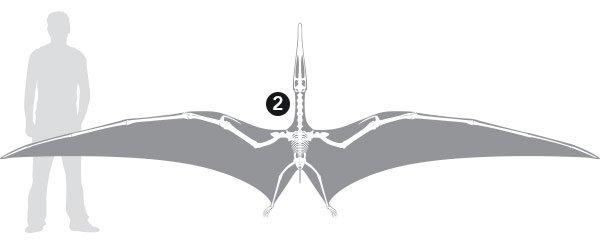 Bones02