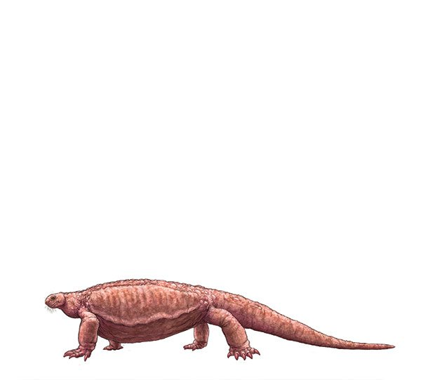 cotoylorhynchus