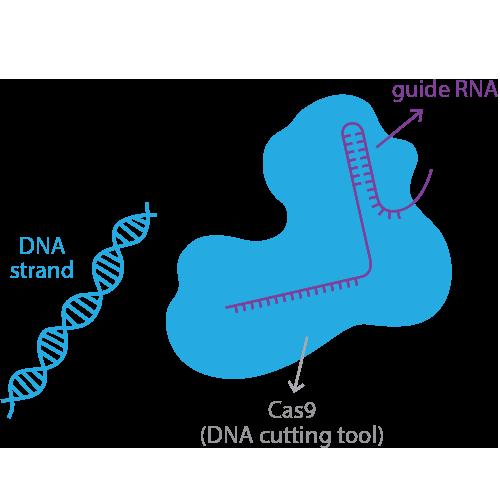 CRISPR Tool
