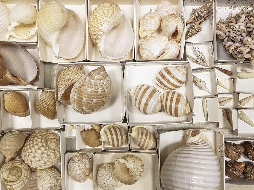 Catalog Shells