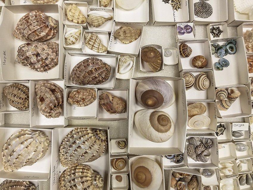 Snail Variety