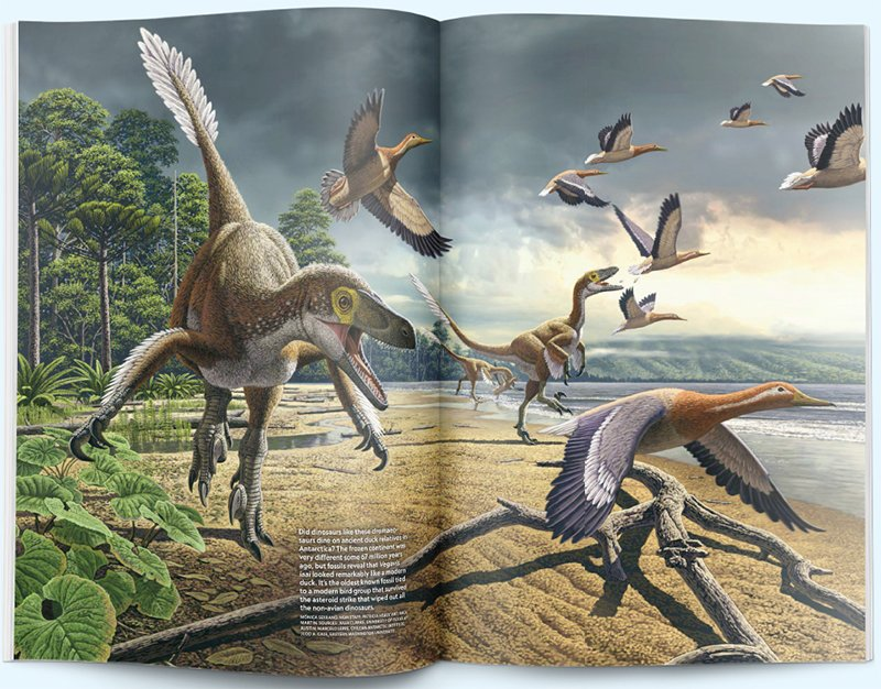 Dinosaurs and Birds