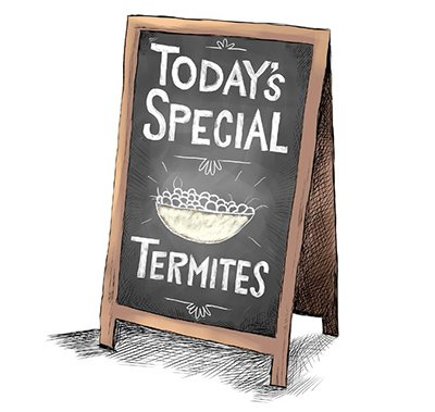 Termite Specials