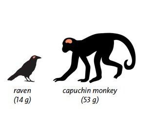 Birds vs. Primates