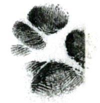 Sugar Glider Fingerprint