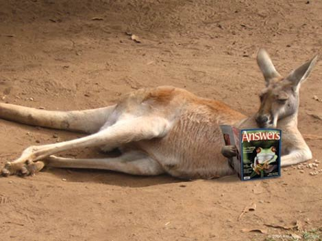Kangaroo with Answers magazine
