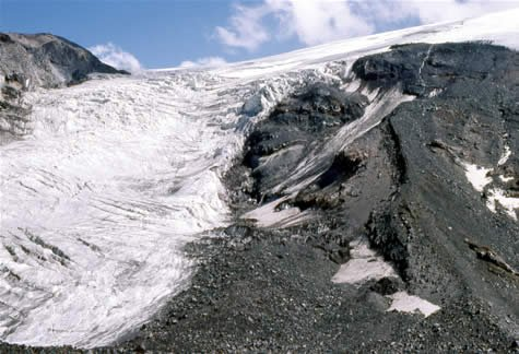 Wood adjecent to and within the Parrot Glacier