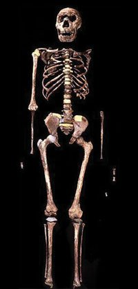 Turkana boy skeleton