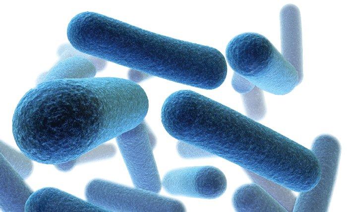 Bacilli Bacteria