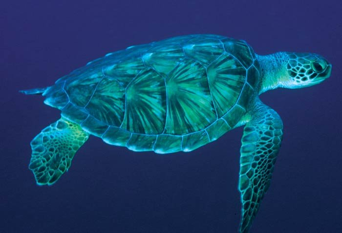 Sea Turtle Profile
