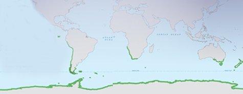 Where do penguins live?