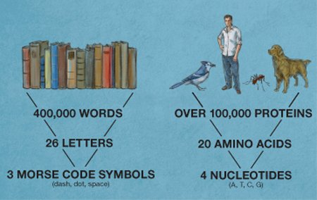 The Letters of a Language
