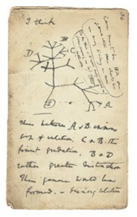 Sketch from one of Darwin's notebooks.