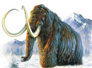 Hairy Elephant
