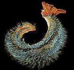 Deep Sea Vents Life S Toxic Sanctuary Answers In Genesis