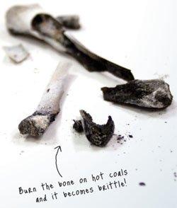 Brittle Chicken Bone
