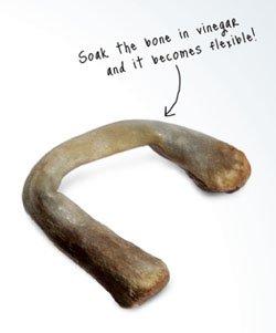 Flexible Chicken Bone