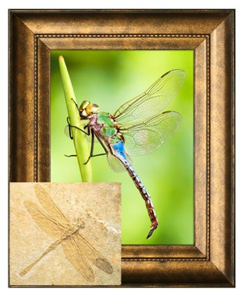 Living and Fossil Dragonflies