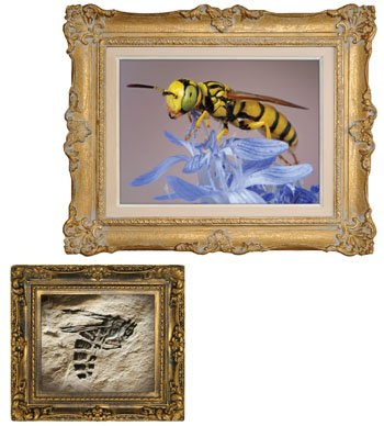 Living and Fossil Wasps