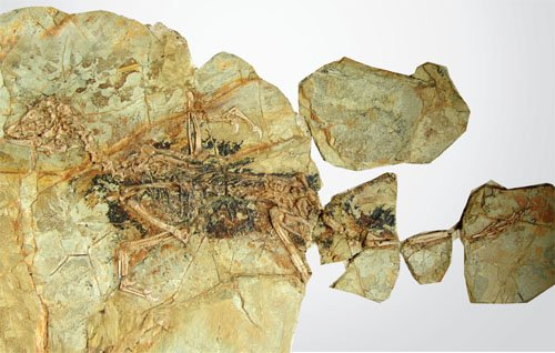 Fossil Discovery