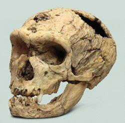 Who Were Cavemen Answers In Genesis