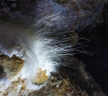 Cave Hair