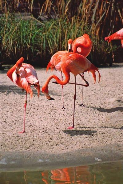 Flamingo Kids Answers