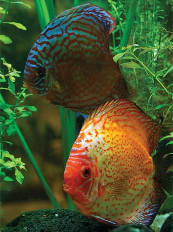Discus Fish Kids Answers