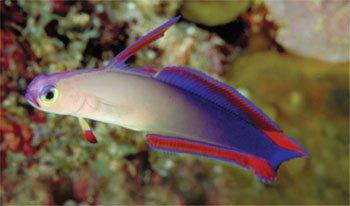 Purple Firefish Kids Answers