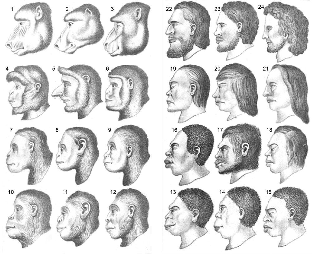 Illustrations in Chapman