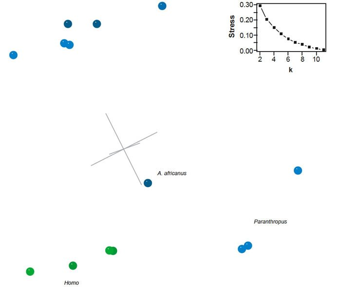Three-dimensional MDS results for the dataset of Strait and Grine (2004)