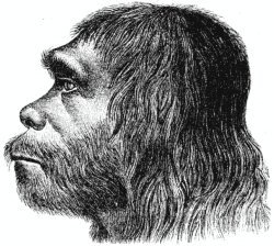 Homo sapiens neandertalis