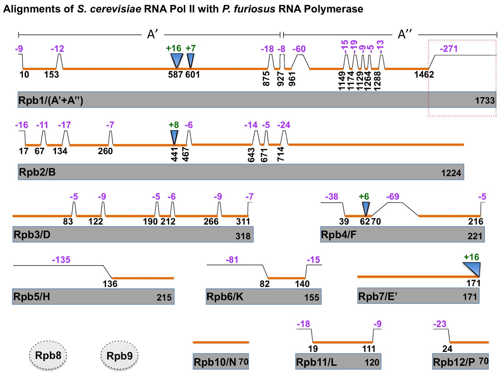 comparison between dna and rna essay What are the similarities between dna and rna similarities between dna and rna and their differences biochemistry biology college essays econometrics.